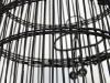 TREVOR BABB, Cage (detail), 2009