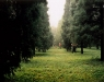 Allen Frame. Beijing park. 2008. Chromogenic color print. 30 x 35 1/2 inches. Courtesy of Gitterman Gallery.