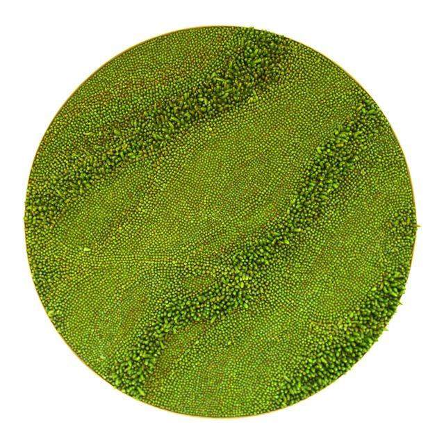 Brigitte Bouquet. Grassy Patch in Zichen-Zussen-Bolder, 2009. ceramic, hessian, wood. 120